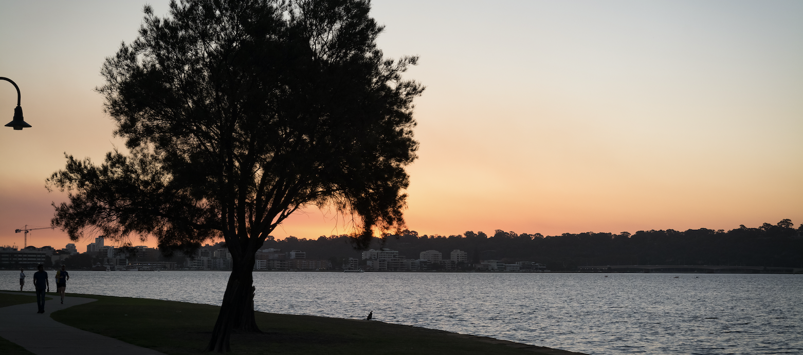 A beautiful night on a Perth river with a tree and the sun setting in the background.